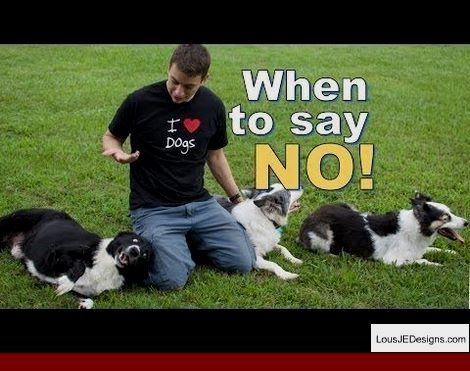 Tips For Training A Dog Tricks And Pics Of Tips For Training Timid