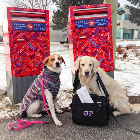 Honey And Briar Took A Walk To The Mailbox Today To Deliver Claim
