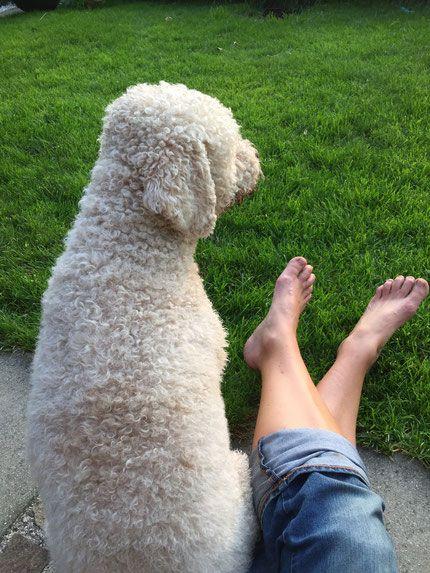 Lagotto Romagnolo Kleiner Italiener Mit Ziemlich Grossem Potenzial Zum Herzensbrecher Crazy Dog Fred Wild Walks Sabine Mei In 2020 Hunde Hundeschule Liebenswert