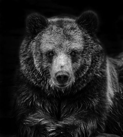 """Brown Bear"" by Ricky Robinson. Colour photograph on Paper, Subject: Animals and birds, Photorealistic style, From a limited edition of 75, Signed and numbered on the back, This artwork is sold unframed, Size: 42 x 29.7 x 0.1 cm (unframed), 16.54 x 11.69 x 0.04 in (unframed), Materials: Printed on high quality Museo Mat paper"