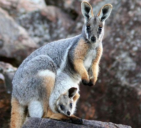 Mother and baby animals images – Animal Life