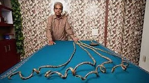 Pin By Bangla Gorom On Bangla Latest News Long Fingernails Long Nails Guinness World Records