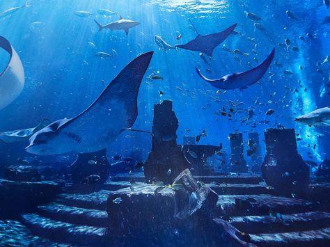 Tourisme Emirates Offre Une Visite Gratuite Au Parc Aquatique De