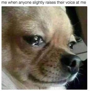 18 Memes Only Super Sensitive People Will Relate To Dog Crying Dog Memes Funny Dog Memes