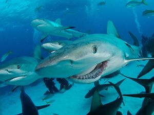 Where in the world can you have both a land and sea safari? Great whites, mantas, lions and much more in these 10 places for scuba divers.