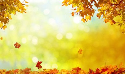 Beautiful Autumn Landscape With Yellow Trees And Sun Colorful Foliage In The Park Falling Leaves Natural Back Yellow Tree Autumn Landscape Natural Background