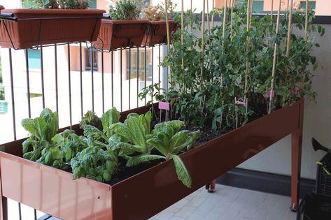 Fiori Gialli Balcone.Orto Sul Balcone Orto Giardinaggio Sul Balcone E Balconi