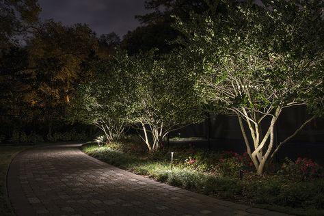 Landscape Lighting Small Trees Landscape Lighting Design Outdoor Lighting Landscape Landscape Lighting