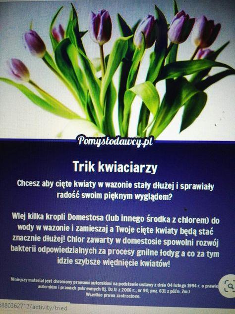 Pin By Marta On Kwiaty Herbs Plants