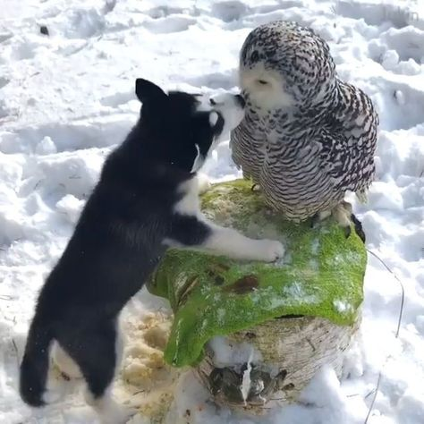 puppy and owl
