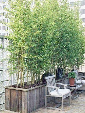 Urban Gardening Denver Between Urban Gardening Jobs Uk So Garden Landscaping Cape Town Either Landscape Garden Design Lei Bamboo Garden Growing Bamboo Backyard