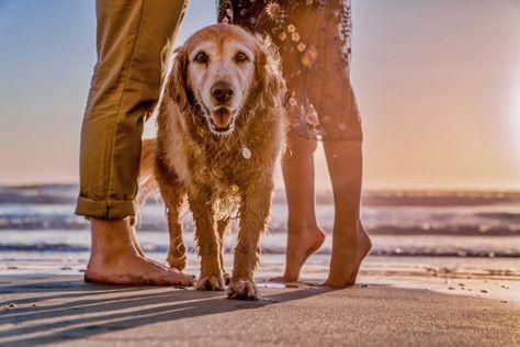 30 Ideas De Mi Perro Perros Mascotas Viajar Con Perros