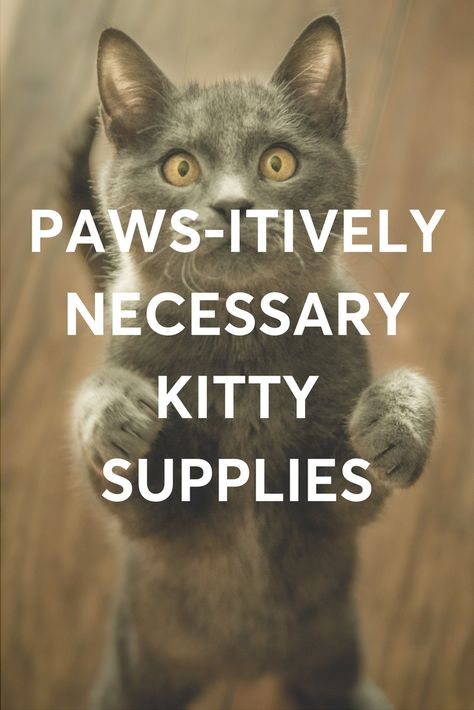 Puns Aside These Supplies Are The Things You Ll Fur Sure Need If You Have A Cat In Your Life Office Dog Shopping Near Me Find Pets