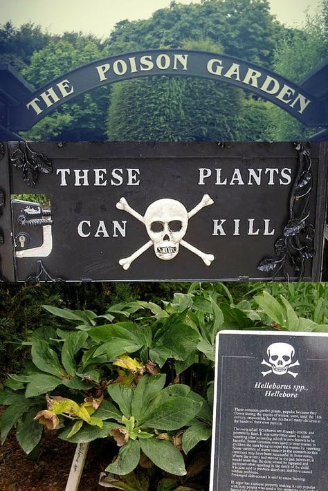 Life In The Poison Garden Inspiringtravellers Com Poison Garden Deadly Plants Poisonous Plants