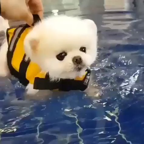 Time for a swim