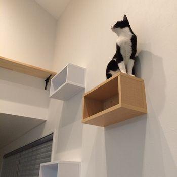 猫の幸せそうな顔がみたい 賃貸でもokなキャットウォークdiy リノベアイデア集 キナリノ キャット ウォーク Diy 猫 猫 インテリア