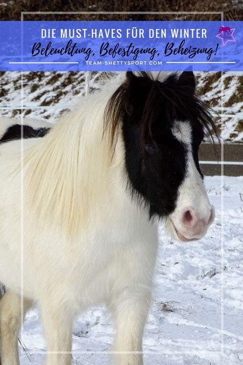 Winter Im Offenstall Pferdeliebe Shetlandpony Pferdetipps