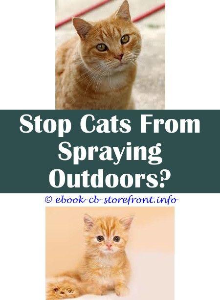 9 Vigorous Tricks Pet Apple Spray Cats Cat Spraying Indoors Cleaning Anti Cat Spray Nz Cat Flea Carpet Spray Cat Behavior Spra Aerosol Admirable Toxoplasmosis