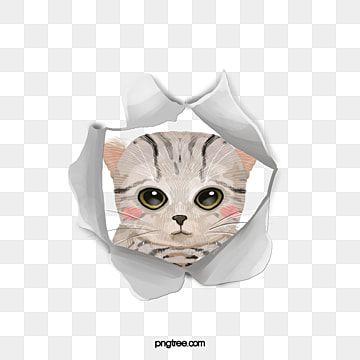 แมว ส ตว เล ยง แมว กองท น ส ตว เล ยงภาพ Png และ Psd สำหร บดาวน โหลดฟร ล กแมว ส ตว เล ยง แมว