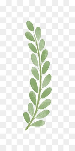 Pin By Tiffany Massie On Clipart Olive Branch Clip Art Tree Branches
