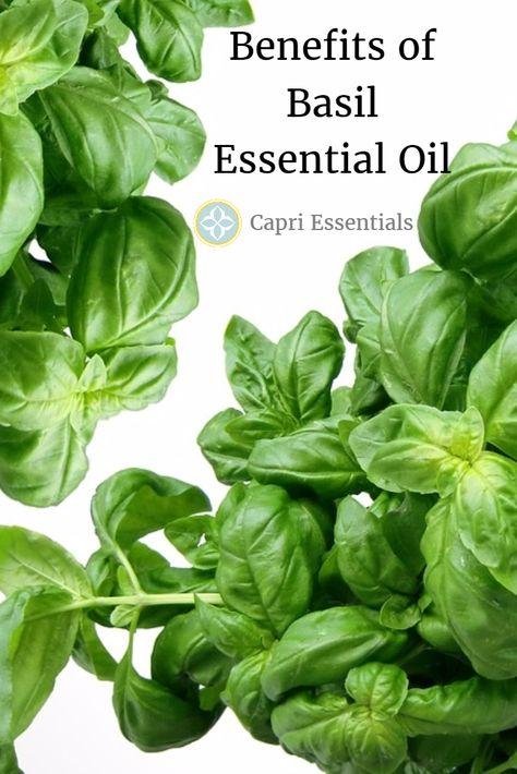 is basil leaves allowed hcg diet