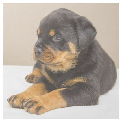 Cute Rottweiler Puppy Gallery Wrap Dog Puppy Dogs Doggy Pup