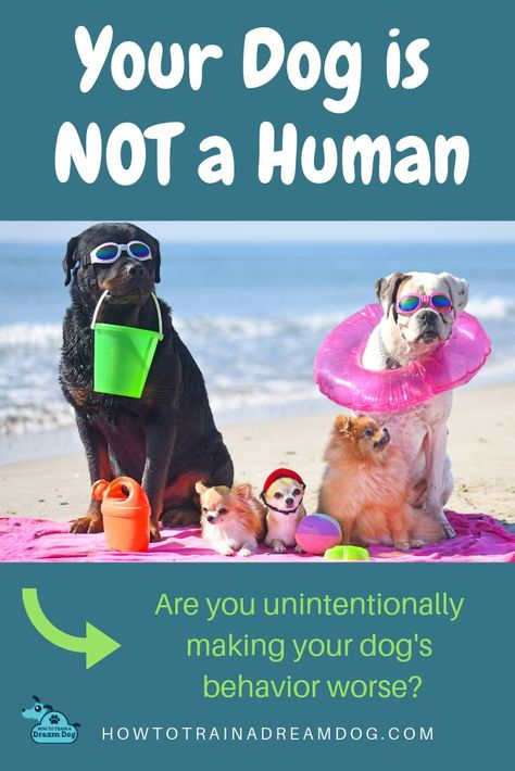Your Dog Is Not Human Dog Behavior Excited Dog Dog Training