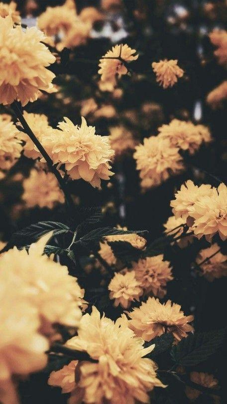 aesthetic wallpaper tumblr yellow flower wallpaper flower iphone wallpaper vintage flowers wallpaper aesthetic wallpaper tumblr yellow