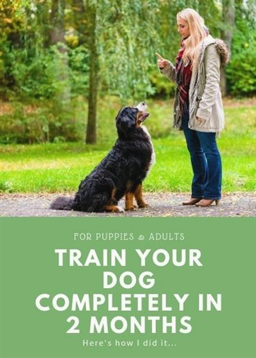 Follow These Tips To Learn How To Lead Your Dog Dog Training