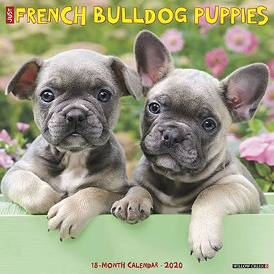 Just French Bulldog Puppies 2020 Wall Calendar French Bulldog