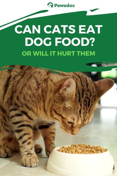 Will Dog Food Hurt Cats How To Make Your Cats Eat Their Food In 2020 Cat Nutrition Healthy Cat Food Dog Food Recipes