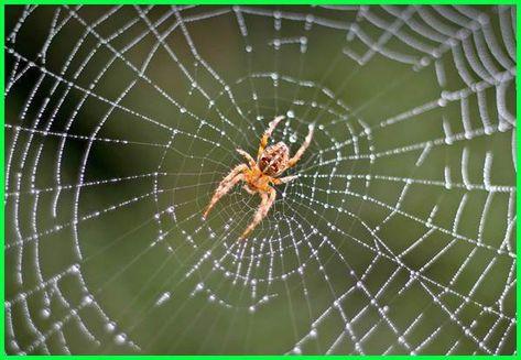 Lengkap Contoh Hewan Vertebrata Dan Invertebrata Hewan Cnidaria Binatang
