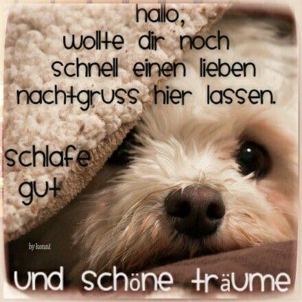Guten Abend Gute Nacht Bilder Hund Gute Nacht Bilder Schone Gute Nacht Gute Nacht Lustig