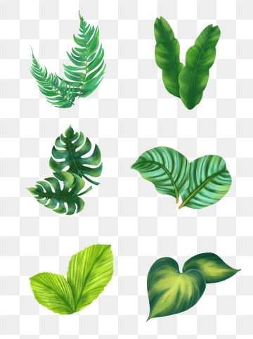 Green Tropical Plant Palm Leaf Border Palm Leaf Botany Plant