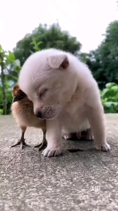 Cute Puppy Video to watch today