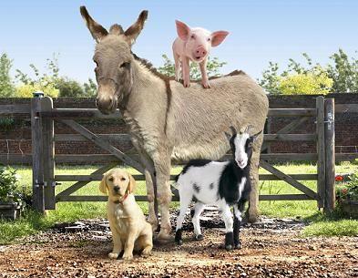 animali da fattoria - Cerca con Google
