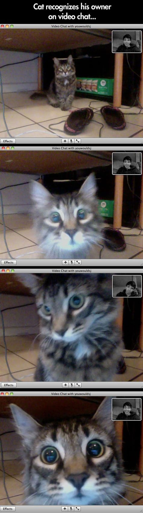 Crazy Cat Lady Internet Dating Video Chat