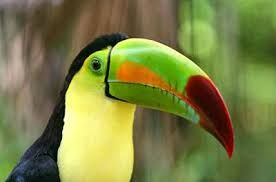 Image result for tropical amazon wildlife paradise