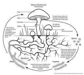 120 Sēnes Ideas Stuffed Mushrooms Mushroom Art Mushroom Crafts