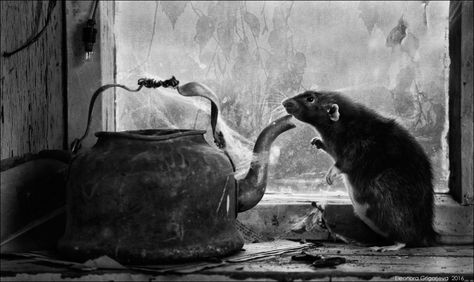 #крыса #дамбо #декоративная крыса #чайник #старый дом #крысиные истории Author: Eleonora Grigorjeva