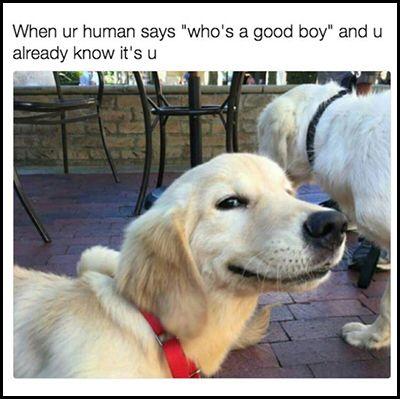 Dog Parents Know Cute Dog Memes Dog Jokes Funny Animals
