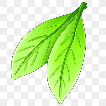 Green Cartoon Leaf Illustration Two Leaves Leaves Plant Illustration Png Transparent Clipart Image And Psd File For Free Download Plant Illustration Cartoon Leaf Leaf Illustration