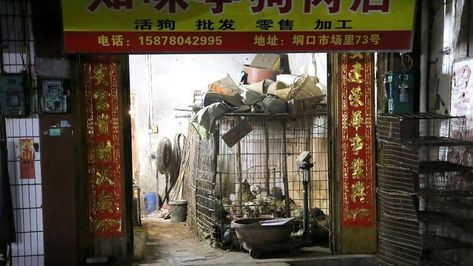 Petition Update Stop Yulin Government From Holding 2019 Yulin