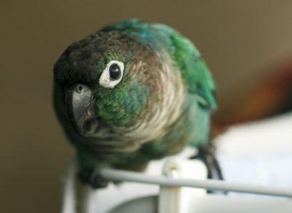 The Top 10 Best Pet Birds Best Pet Birds Bird Breeds Pet Birds