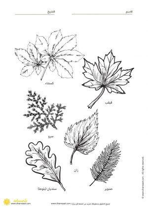 انواع اوراق الاشجار نشاطات وتدريبات Leaf Tattoos Maple Leaf Tattoo Flower Tattoo