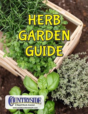 A Guide To Successfully Growing Herbs Outside Gardening
