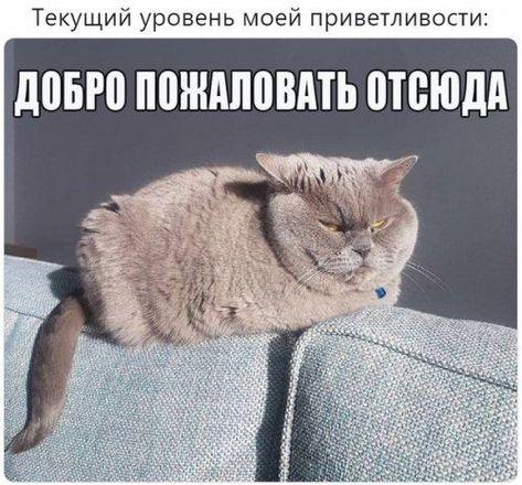 Фотоприколы и смешные картинки! / Приколы
