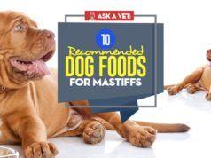 Recipe Homemade Dog Food For Struvite Bladder Stones Make Dog