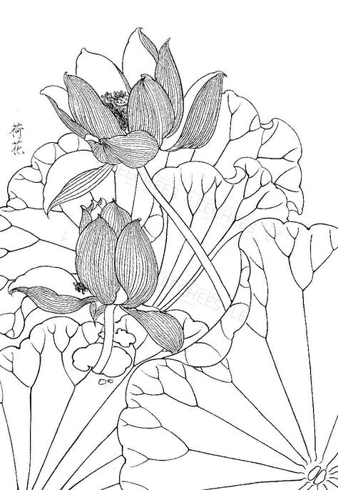 Lotus Flowers Adult Colouring Page Download Gong Bi Oriental Art