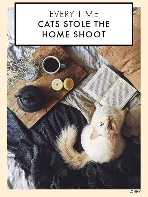 15 Times Cats Stole The Home Shoot